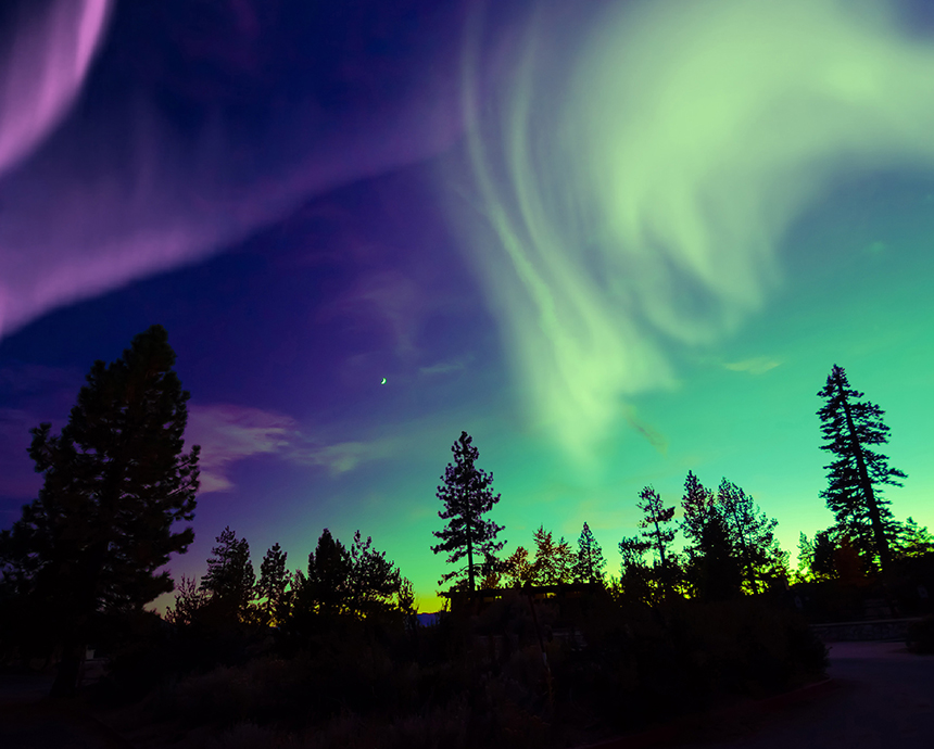 The Northern Lights with shadows of trees framing it.