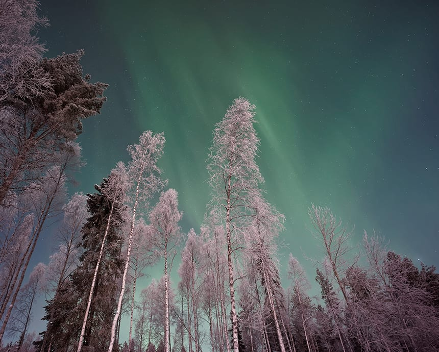 Northern Lights illuminate snow covered trees
